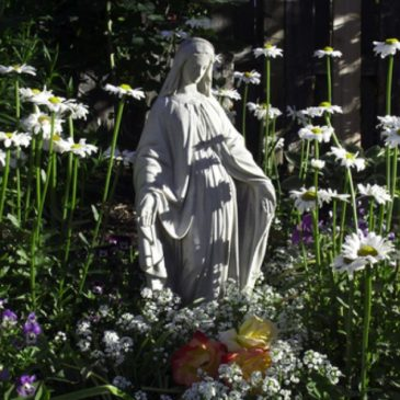 Learn how to plant a Mary Garden